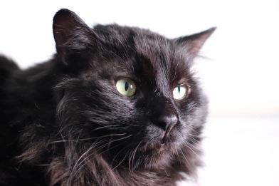 Henrys Haven Cat Rescue